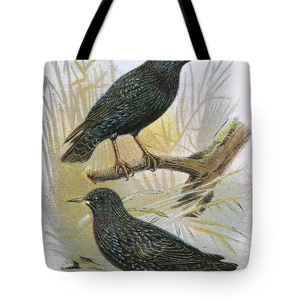 Common Starling Top And Intermediate Starling Bottom Tote Bag