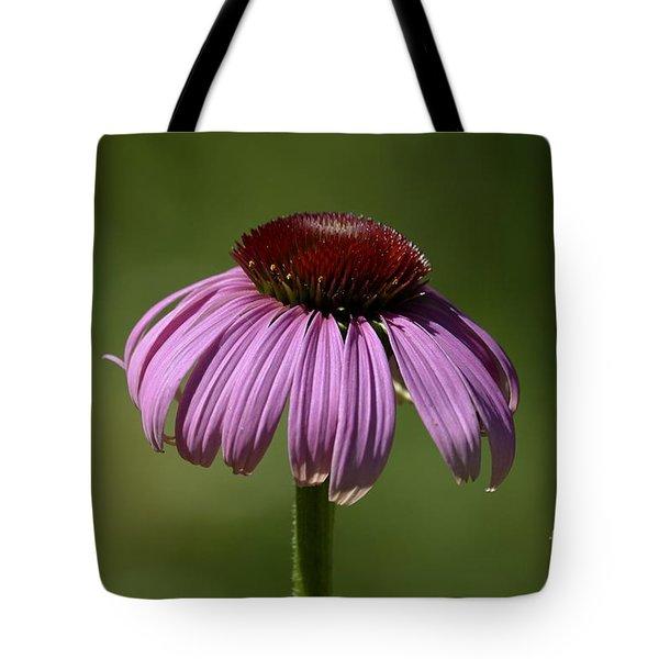 Coneflower Tote Bag by Randy Bodkins