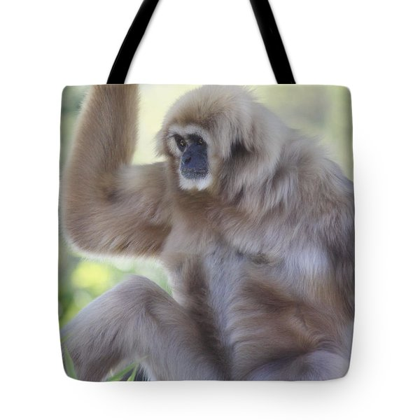 Contemplating Gibbon Tote Bag by Melanie Lankford Photography