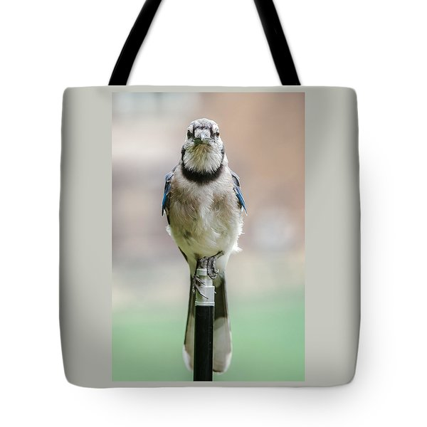 Contemplative Blue Jay Tote Bag by Jim Moore