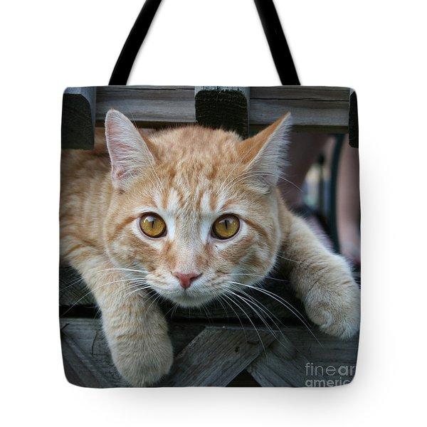 Cool Cat Named Calvin Tote Bag