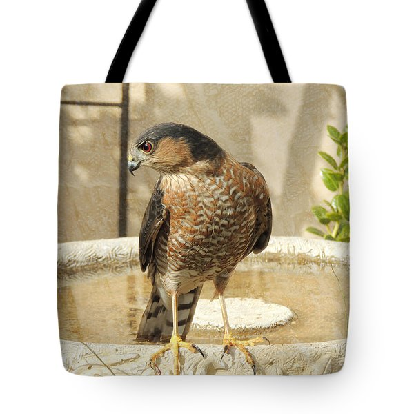 Cooper's Hawk At The Bird Bath Tote Bag