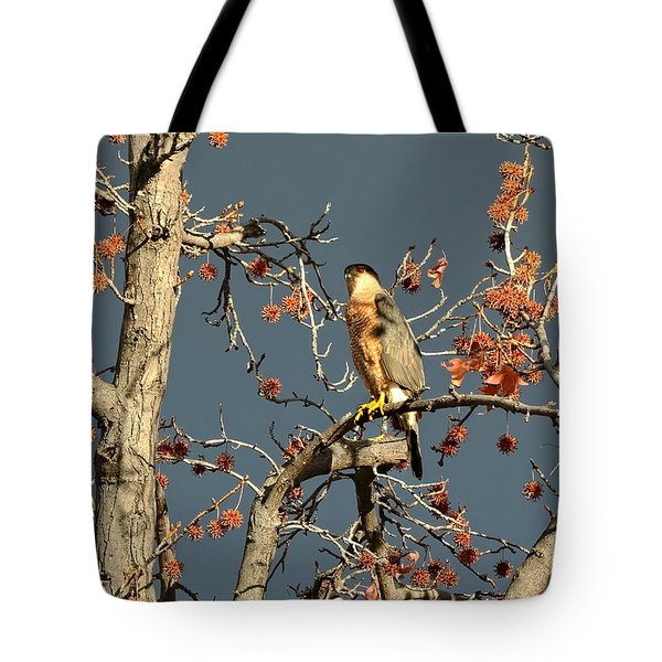 Cooper's Hawk Catches Sun In Stormy Sky Tote Bag by Susan Wiedmann