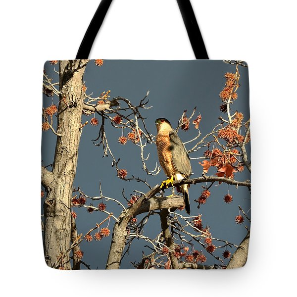 Cooper's Hawk Catches Sun In Stormy Sky Tote Bag