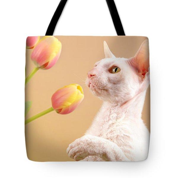Cornish Rex Cat Tote Bag by Verena Matthew