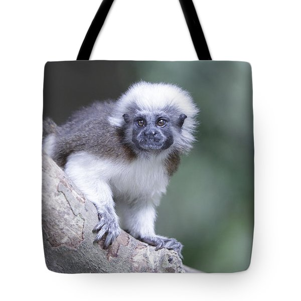 Tote Bag featuring the photograph Cotton Top Tamarin  by Shoal Hollingsworth