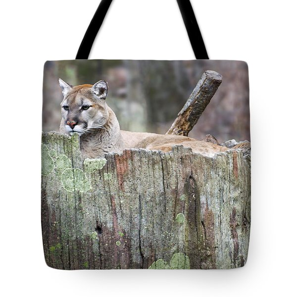 Cougar On A Stump Tote Bag by Chris Flees