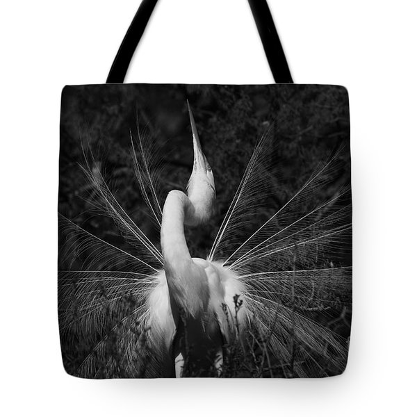 Tote Bag featuring the photograph Great Egret Courtship Plumes  by John F Tsumas