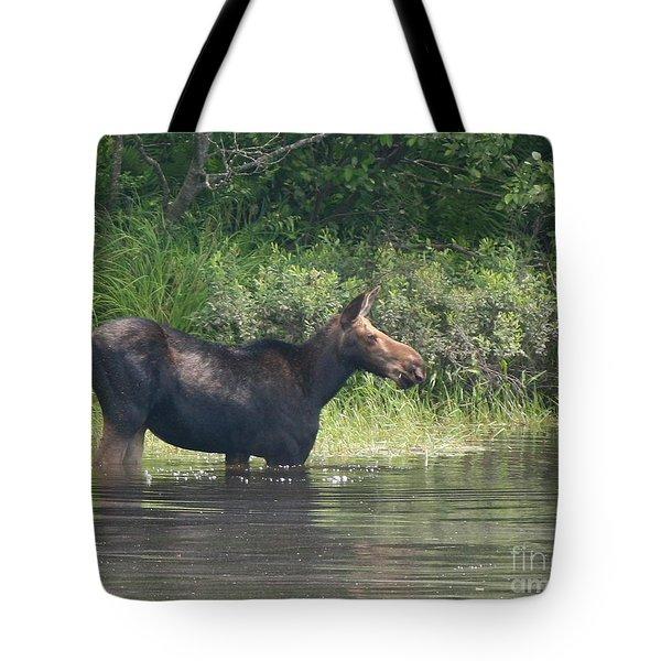Cow Moose Breakfast Tote Bag by Neal Eslinger