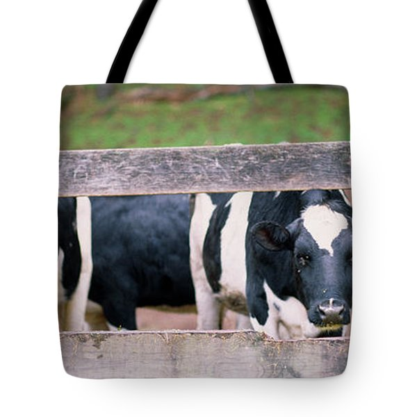 Cows Looking Through A Fence Tote Bag