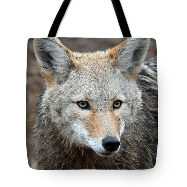 Tote Bag featuring the photograph Coyote by Athena Mckinzie