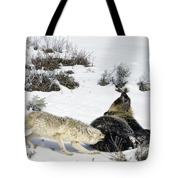 Tote Bag featuring the photograph Coyote Biting A Grizzly by J L Woody Wooden