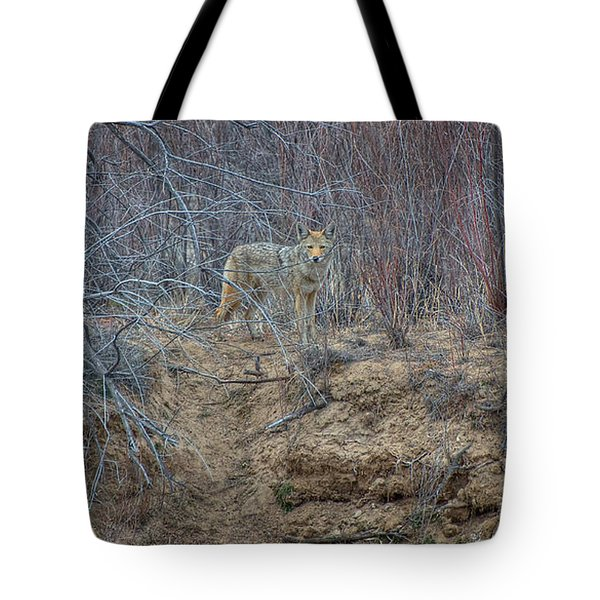 Coyote In The Brush Tote Bag by Britt Runyon