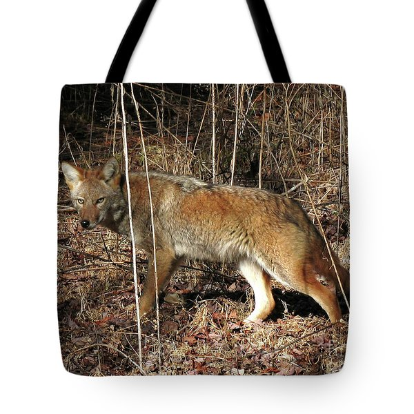 Coyote In The Cove Tote Bag by Douglas Stucky