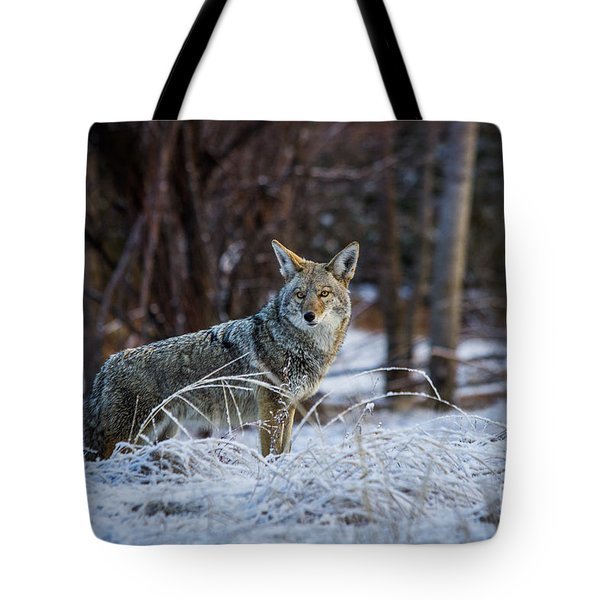 Coyote In The Meadow  Tote Bag