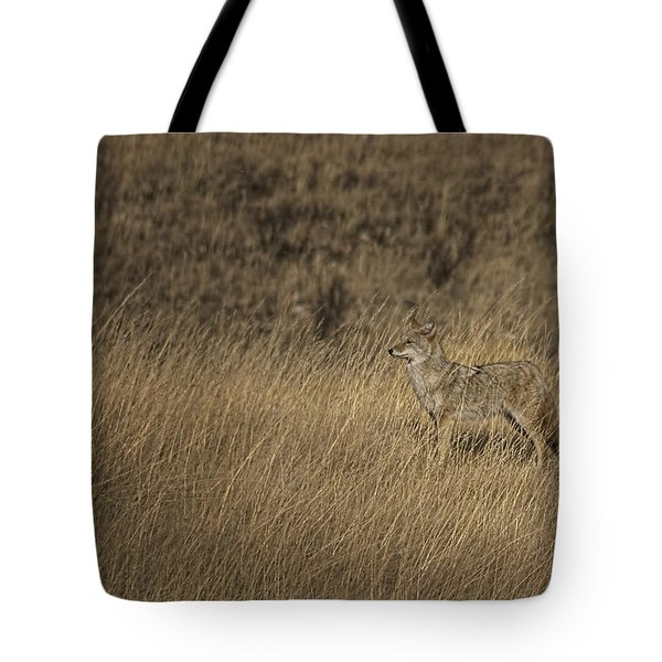 Coyote Standing In Field Of Dried Tote Bag by Roberta Murray