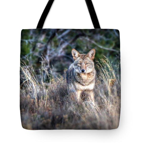 Coyote Stare Down Tote Bag