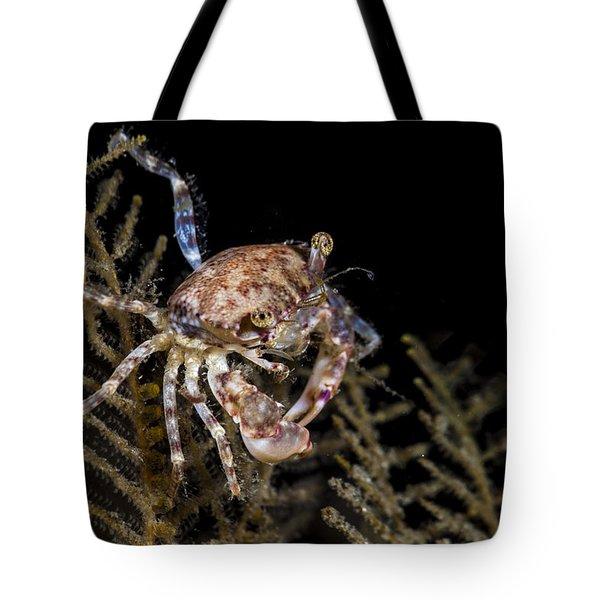 Crab Sitting At Night Tote Bag