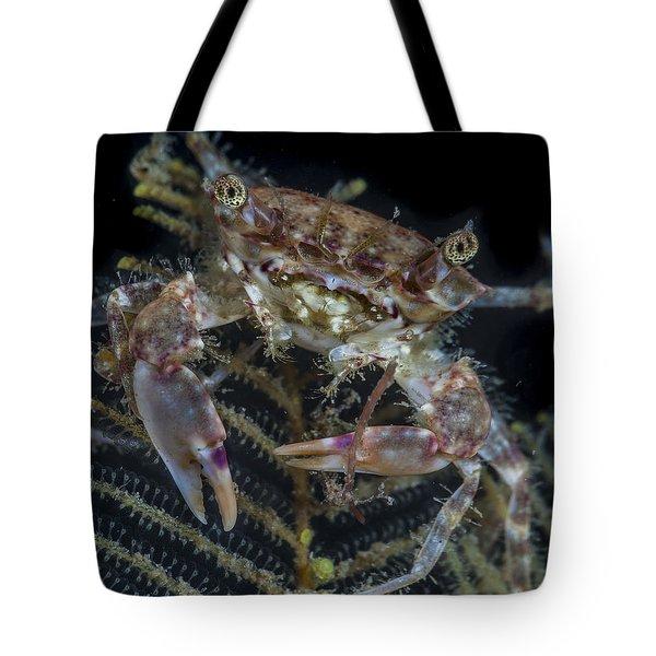 Crab Staring At You Tote Bag