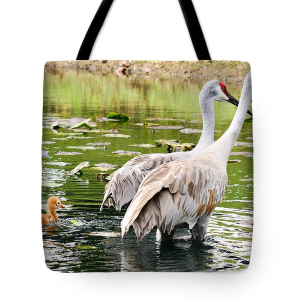 Crane Family Goes For A Swim Tote Bag by Susan Molnar