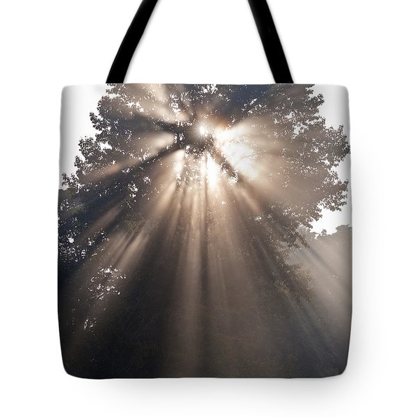 Crepuscular Rays Coming Through Tree In Fog At Sunrise Tote Bag