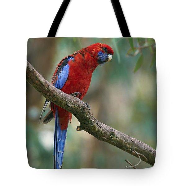 Crimson Rosella Parrot Canberra Tote Bag