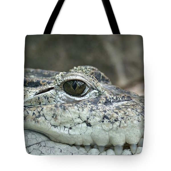 Tote Bag featuring the photograph Crocodile Animal Eye Alligator Reptile Hunter by Paul Fearn