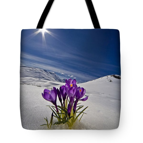 Crocus Flower Peeking Tote Bag