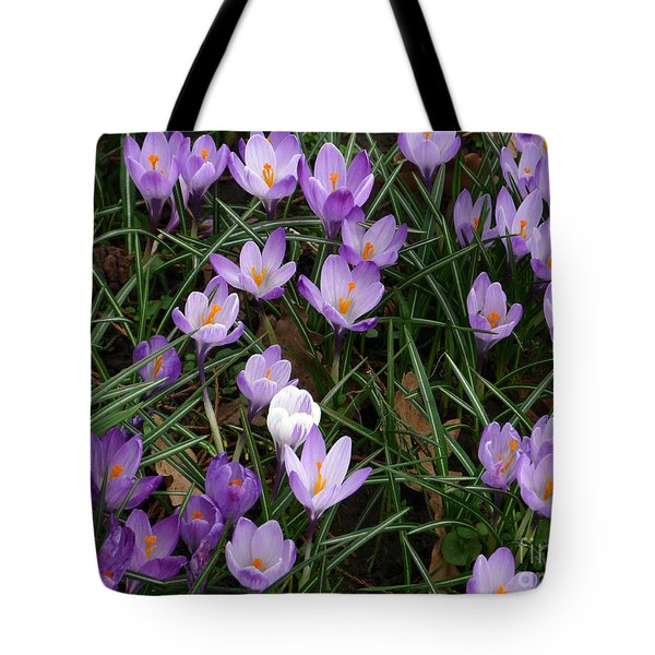 Tote Bag featuring the photograph Crocus Flowers - Early Spring by Phil Banks