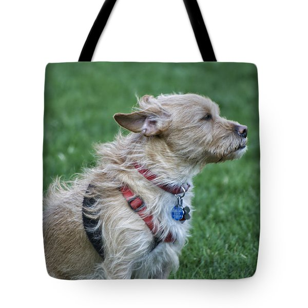 Tote Bag featuring the photograph Cruz Enjoying A Warm Gentle Breeze by Thomas Woolworth