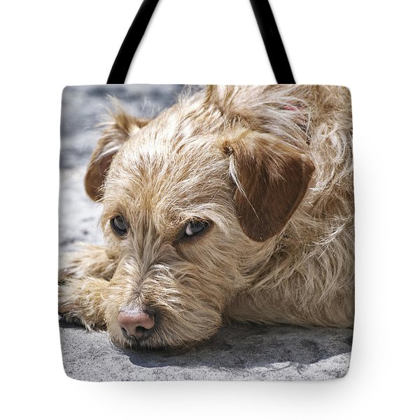 Tote Bag featuring the photograph Cruz You Looking At Me by Thomas Woolworth