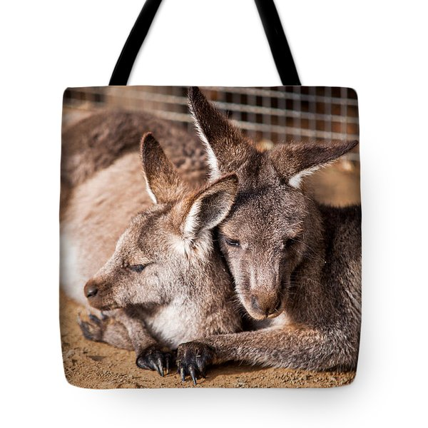 Cuddling Kangaroos Tote Bag