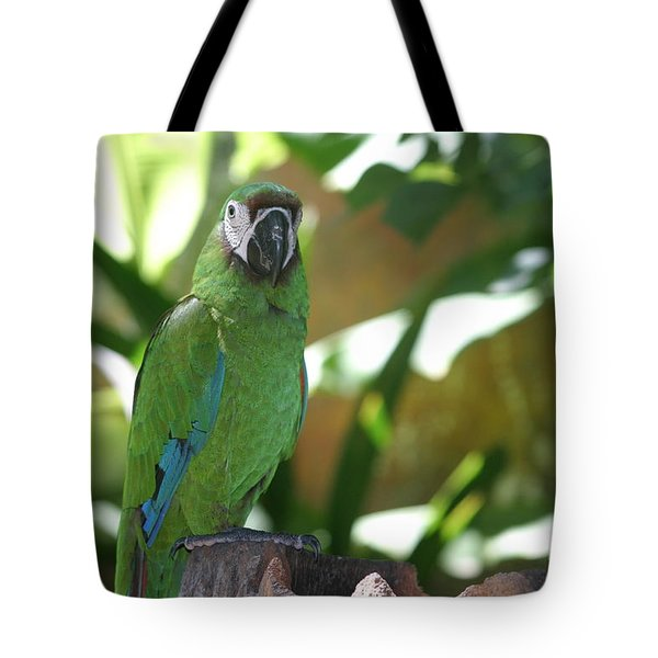 Curacao Parrot Tote Bag by Living Color Photography Lorraine Lynch