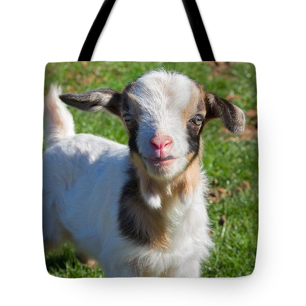 Curious Baby Goat Tote Bag