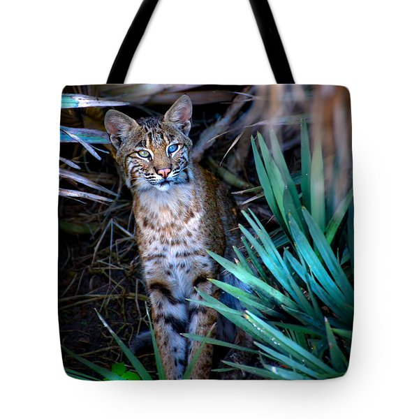Curious Bobcat Tote Bag by Mark Andrew Thomas