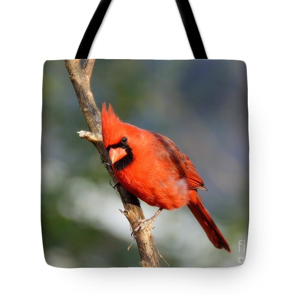 Tote Bag featuring the photograph Curious Cardinal by Lisa L Silva