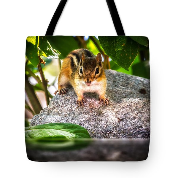 Curious Chipmunk  Tote Bag by Bob Orsillo