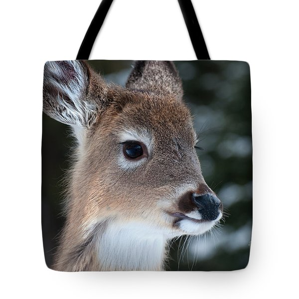 Tote Bag featuring the photograph Curious Fawn by Bianca Nadeau