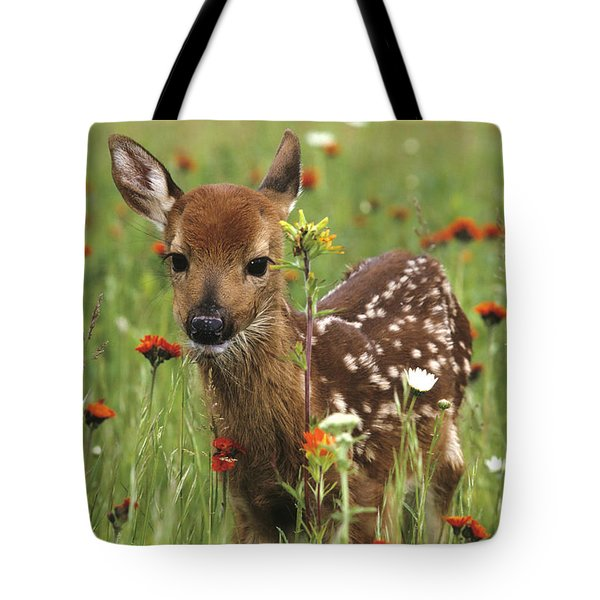 Curious Fawn Tote Bag by Chris Scroggins