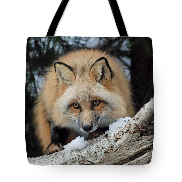 Curious Fox Tote Bag by Richard Bryce and Family