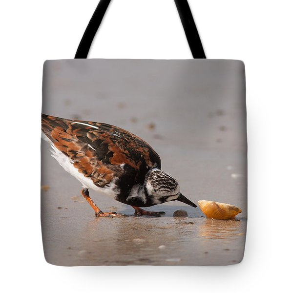 Curious Turnstone Tote Bag by Paul Rebmann
