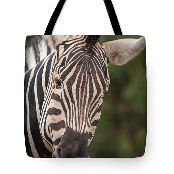 Curious Zebra Tote Bag