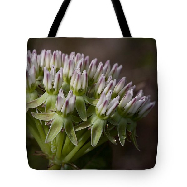 Tote Bag featuring the photograph Curtiss' Milkweed #3 by Paul Rebmann