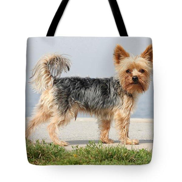 Cut Little Dog In The Sun Tote Bag