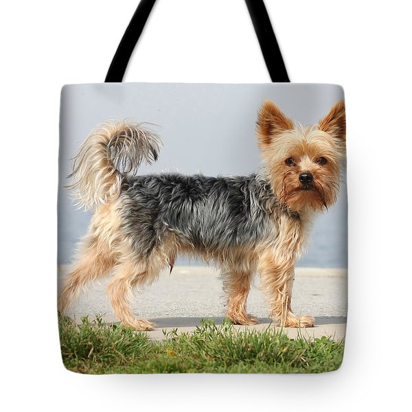 Cut Little Dog In The Sun Tote Bag