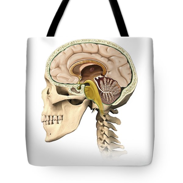 Cutaway View Of Human Skull Showing Tote Bag by Leonello Calvetti