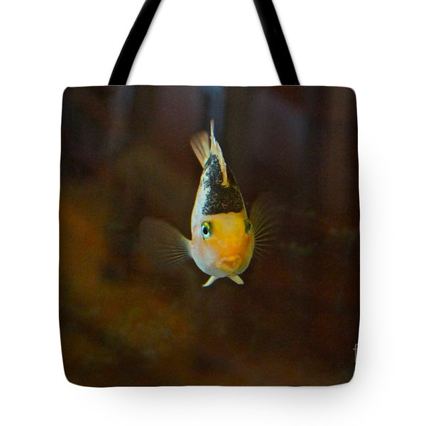 Cute And Content Tote Bag by Byron Varvarigos