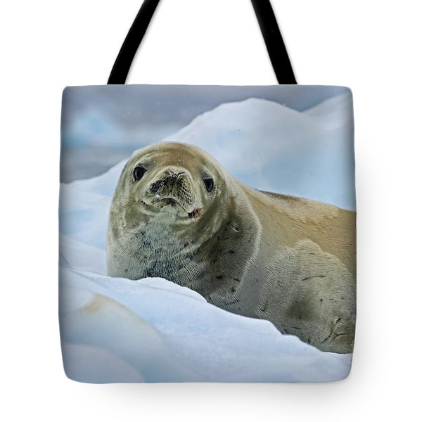 Cute And Cuddly... Tote Bag by Nina Stavlund