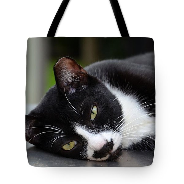 Cute Black And White Tuxedo Cat With Nipped Ear Rests  Tote Bag