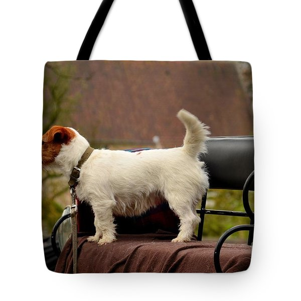 Cute Dog On Carriage Seat Bruges Belgium Tote Bag